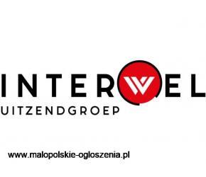 PRACOWNIK PRODUKCJI/OGRODNICTWO/CYKORIA Holandia